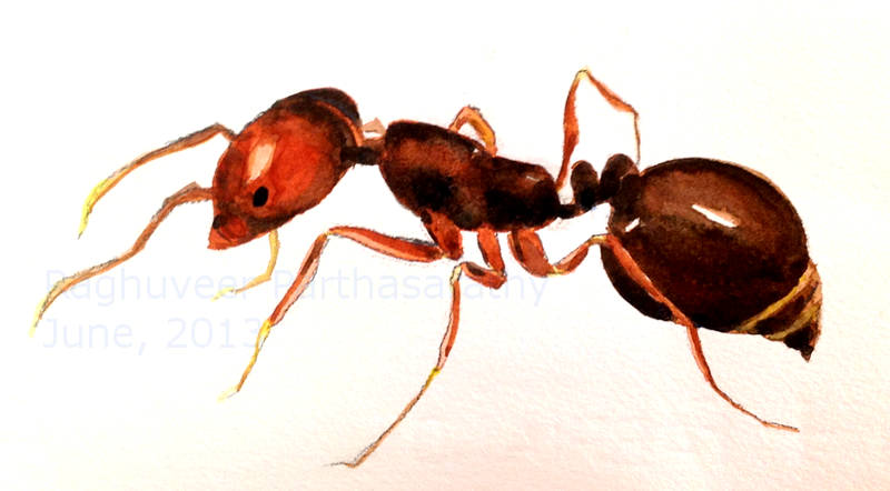 watercolor ant