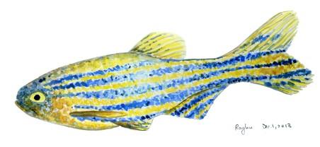 zebrafish watercolor