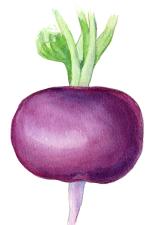 Amethyst radish -- Raghu Parthasarathy