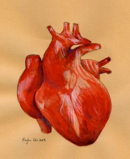 Heart_1Oct2014