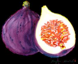 Fig (watercolor)