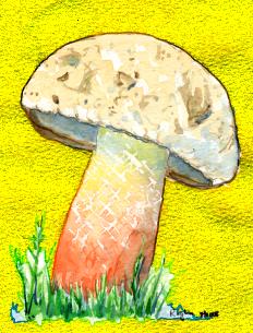 RP -- mushroom