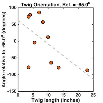 twig_orientation_m65