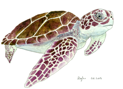 sea_turtle_30Oct2015_small