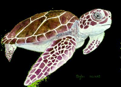 sea_turtle_30Oct2015_small