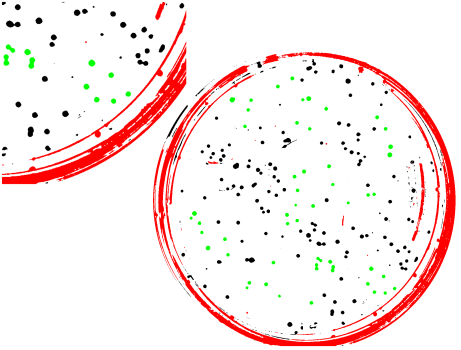 Caption: manually identified colonies (green) and not-colonies (red). Black objects have not been classified.