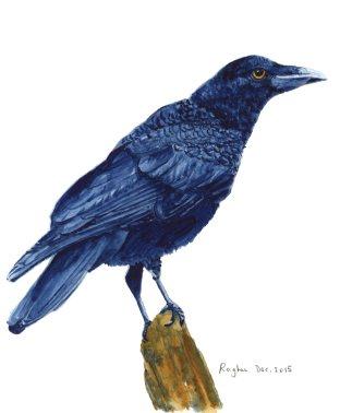 Crow watercolor -- Raghu Parthasarathy