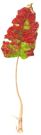 leaf_Nov2018