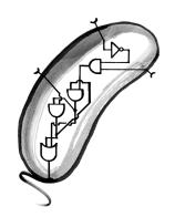 bacteria_circuit_schematic_16Apr2019