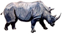 rhino_2019_draft1Sub