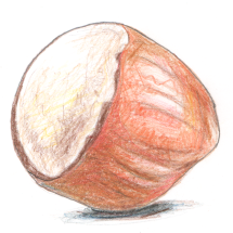hazelnut_Feb2020